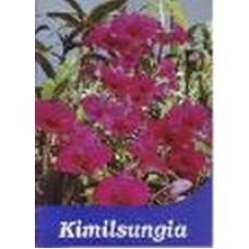 Kimilsungia - Booklet