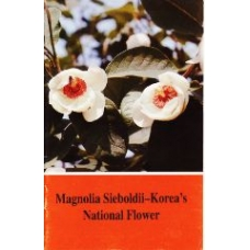 Magnolia Sieboldii - Korea's National Flower